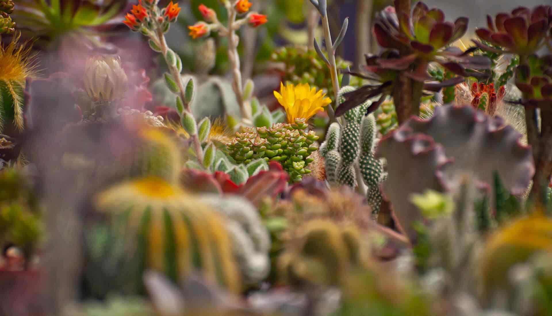 Blog - Harrogate Garden Design, Lisa Norton, North Yorkshire