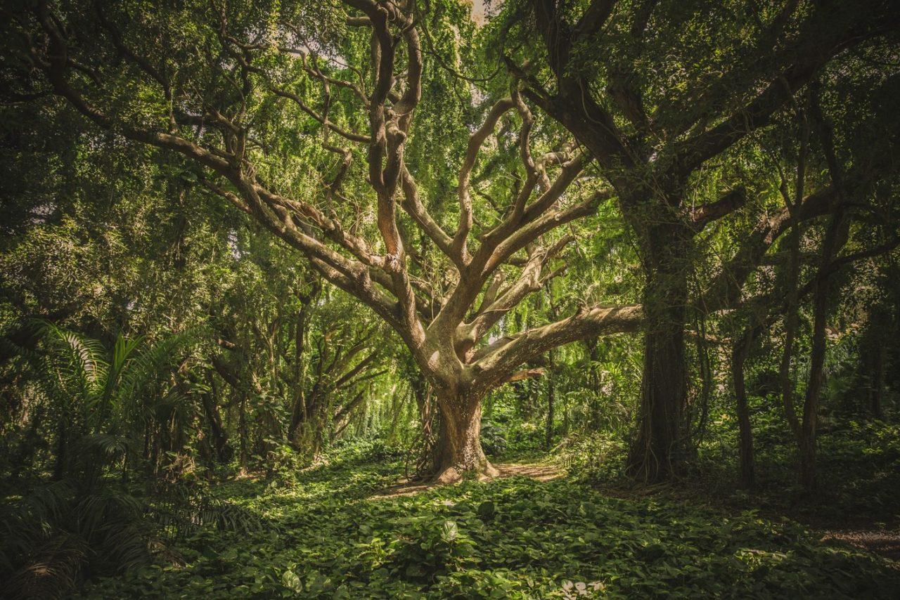 https://harrogategardendesign.co.uk/wp-content/uploads/2021/05/Forest-Air-Blog-1280x854.jpg