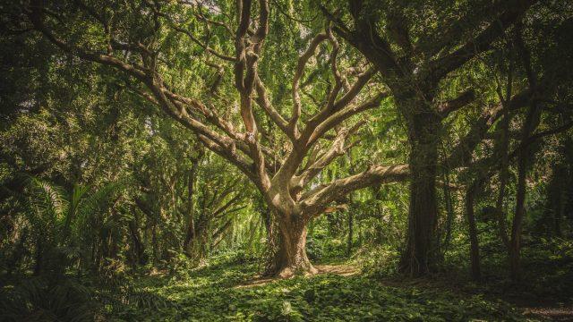 https://harrogategardendesign.co.uk/wp-content/uploads/2021/05/Forest-Air-Blog-640x360.jpg